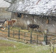 Tiere im Shalomkloster Pupping